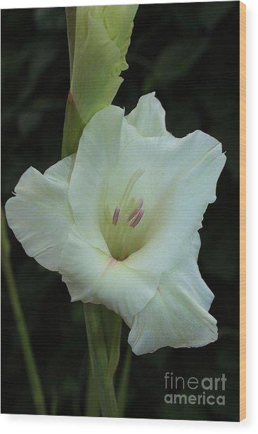 White Gladiolus Wood Print