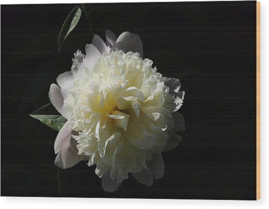 White On Black Peony Wood Print