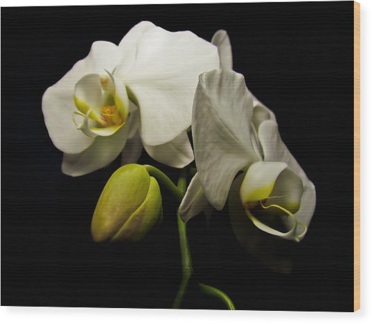 White Orchid I Wood Print