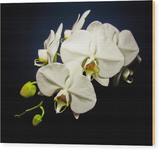 White Orchid IIi Wood Print