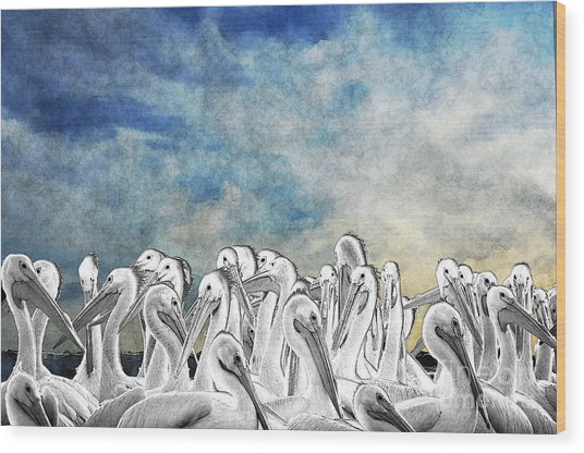 White Pelicans In Group Wood Print