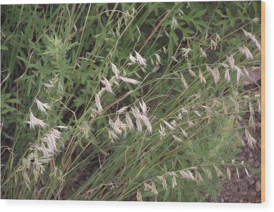 White Reeds Wood Print