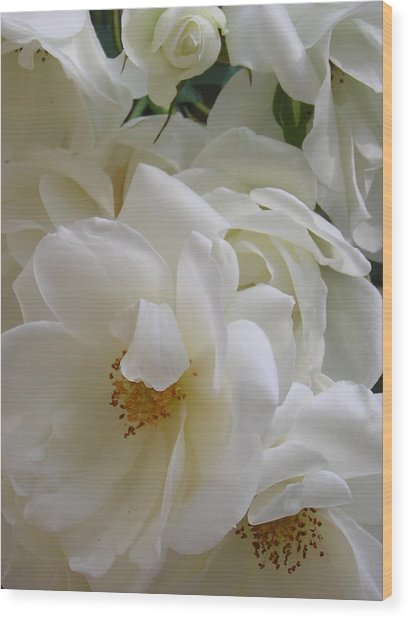 White Rose Medley Wood Print by Tina Ann Byers