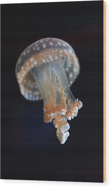 White-spotted Jellyfish Wood Print