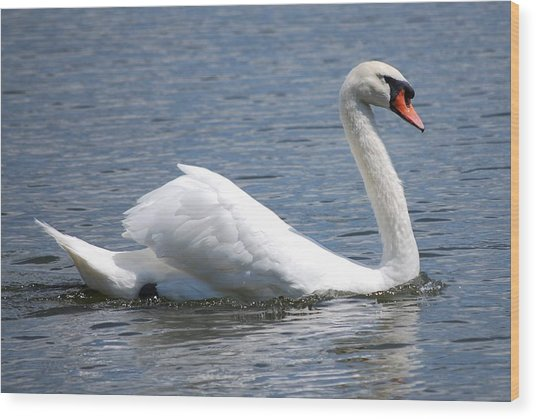 White Swan On A Lake Wood Print by Carrie Munoz