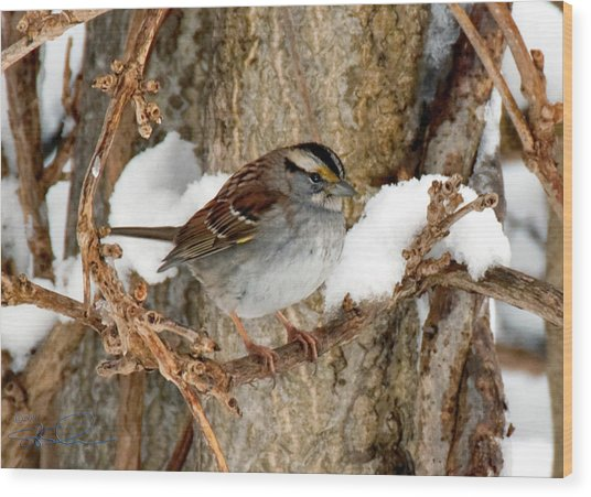 White Throat Wood Print