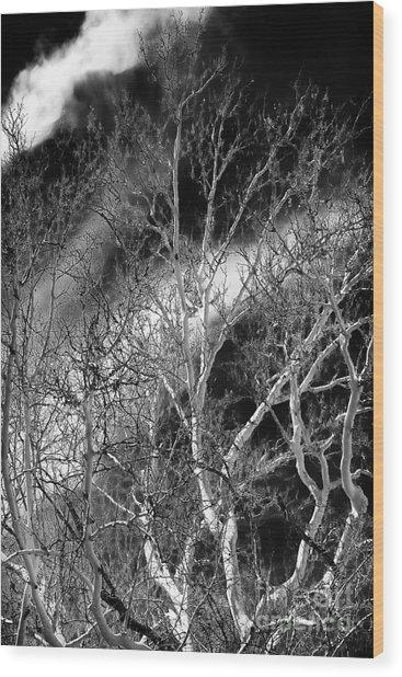 White Tree Wave Wood Print by John Rizzuto