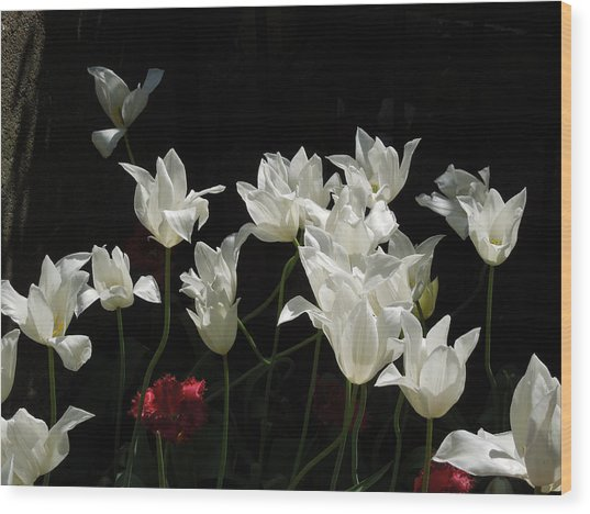 White Tulips On Black Wood Print
