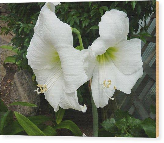 White Twins Wood Print