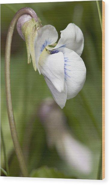 White Violet Macro Wood Print
