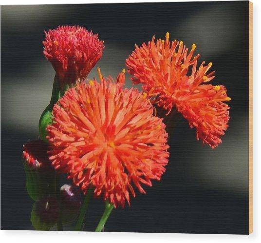 Who Flower Wood Print by Mark Bowmer