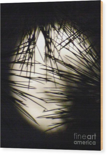 Wicked Moon Wood Print by Gary Brandes