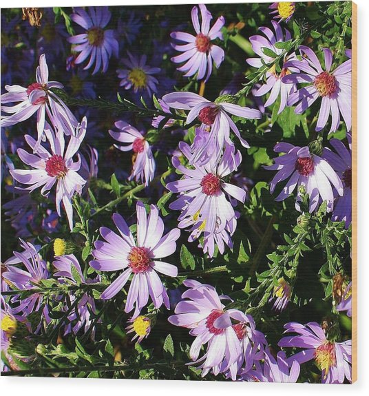 Wild Asters Wood Print by Bruce Bley