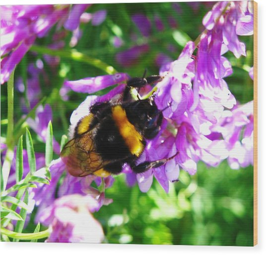 Wild Bee On Flower Wood Print by Andonis Katanos