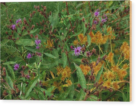 Wild Flowers Wood Print by Beverly Hammond