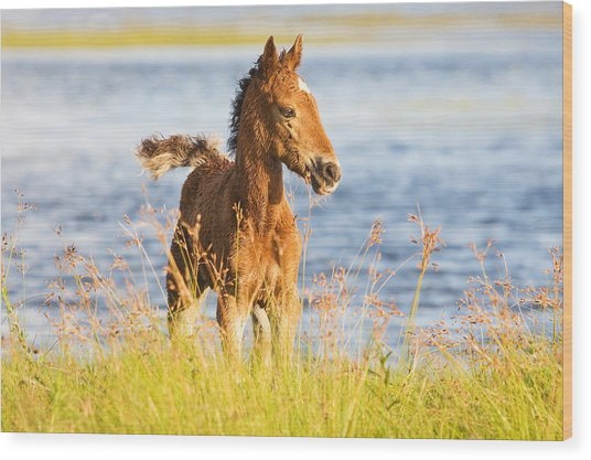 Wild Foal Wood Print