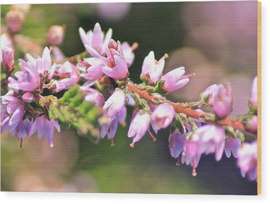 Wild Heather Wood Print by Karen Grist