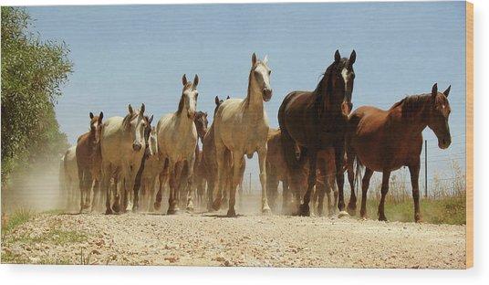Wild Horses Wood Print by Antonio Arcos Aka Fotonstudio Photography