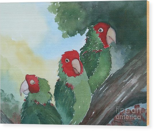 Wild Parrots Of Telegraph Hill Wood Print