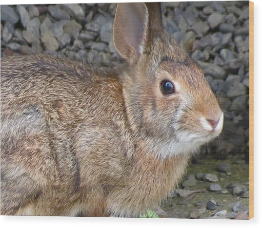 Wild Rabbit Wood Print