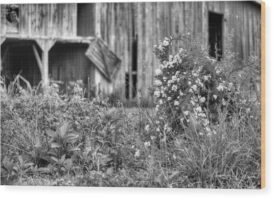 Wild Roses Bw Wood Print by JC Findley
