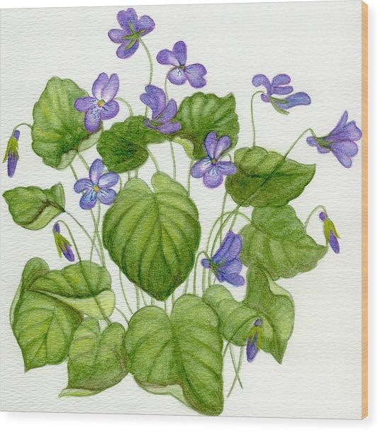 Wild Violets Wood Print by Becky Yates