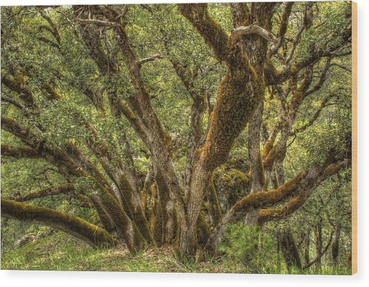 Wild Wood Wood Print by Ren Alber