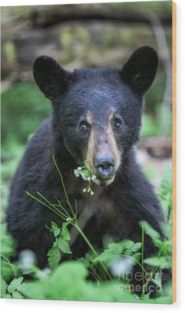 Wildflower Bear Wood Print