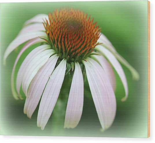 Wildflower In The Park Wood Print by Maureen  McDonald