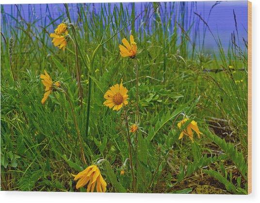 Wildflowers Wood Print by Jen TenBarge