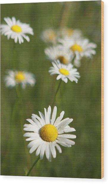 Wildflowers Wood Print by Kathryn Mayhue