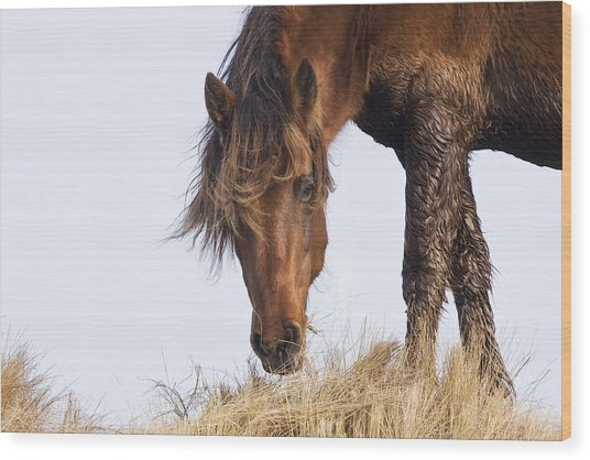 Wildhorse On The High Dunes Wood Print