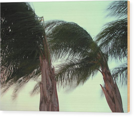Wind Blown Wood Print by T Guy Spencer