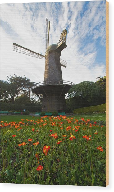 Windmill And Poppies Wood Print