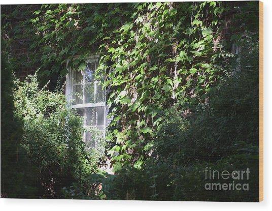 Window And Vines Wood Print