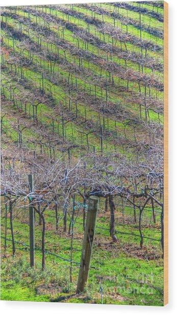 Winery Wood Print by Kelly Wade