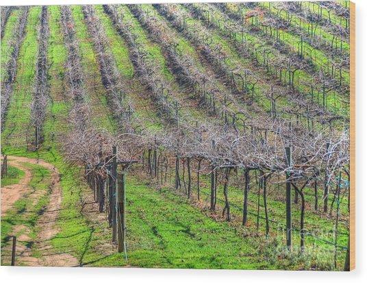 Winery Vineyard Wood Print by Kelly Wade