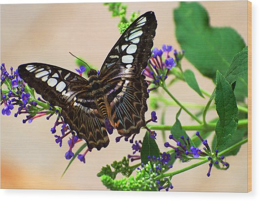 Wing Of Beauty Wood Print by Cheryl Cencich