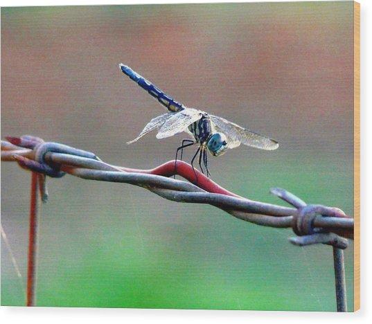 Wings Of Wire Wood Print