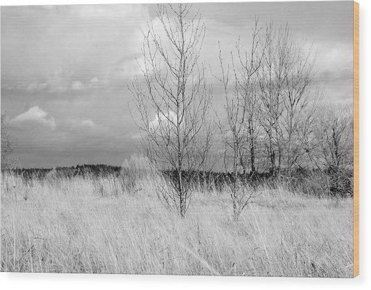 Winter Bare Wood Print