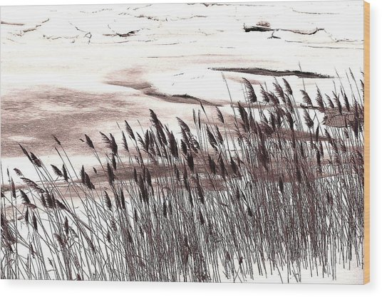 Winter Grasses Wood Print