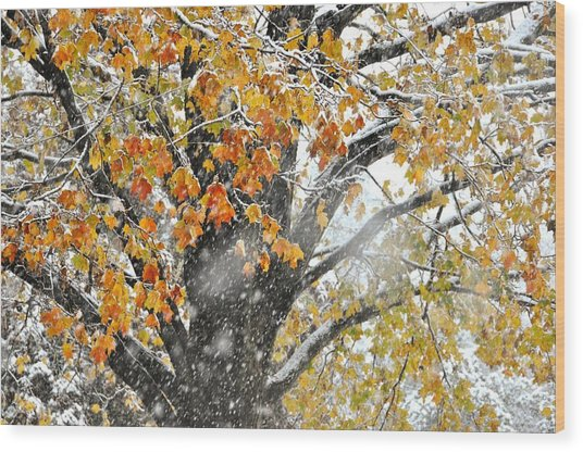 Winter Autumn Collide Wood Print by JAMART Photography