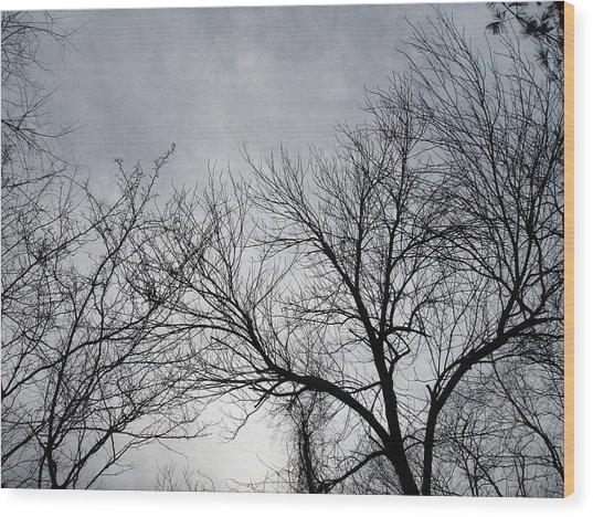 Winter Tree II Wood Print by Suzanne Fenster