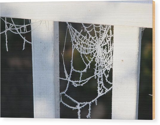 Winter Web Number Two Wood Print