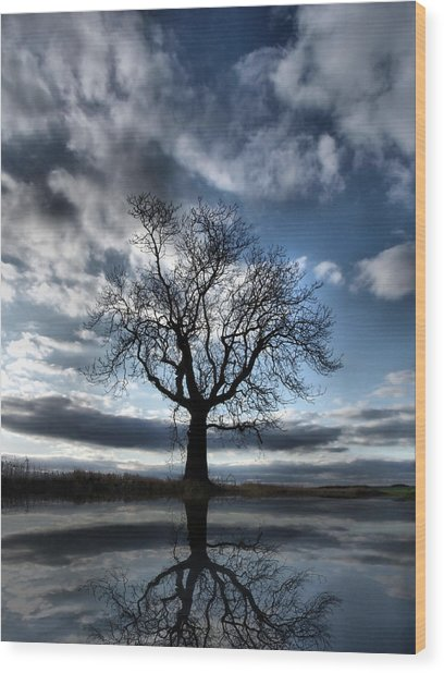 Wintering Oak Tree Wood Print