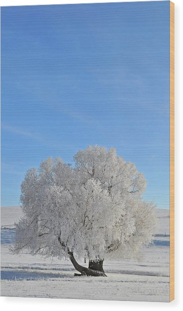 Winter's Coat In Montana's Gallatin Valley Wood Print