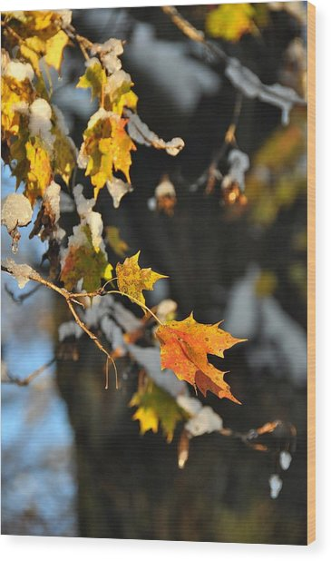 Wintery Pigment Wood Print by JAMART Photography