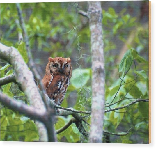 Wise Young Owl Wood Print