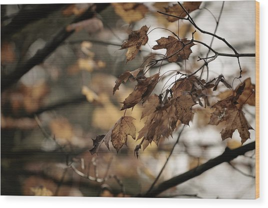 Withered Leaves Wood Print