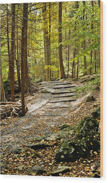 Wooded Stairway Wood Print